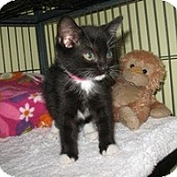 Adopt A Pet :: Cha Cha - Shelton, WA