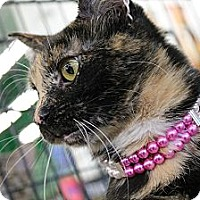 Adopt A Pet :: Buckles - West Lafayette, IN