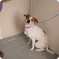 Adopt A Pet :: Bella - Wallaceburg, ON