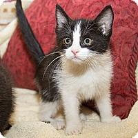 Adopt A Pet :: Sabrina - Irvine, CA
