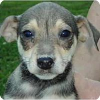 Adopt A Pet :: Isaac - Allentown, PA