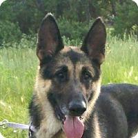 Adopt A Pet :: Major - Denver, CO