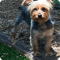 Adopt A Pet :: Brandi - Leesburg, FL