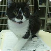 Adopt A Pet :: Baby Mae - Hamburg, NY