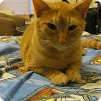 Adopt A Pet :: Peep - Covington, KY