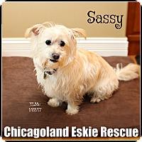 Adopt A Pet :: Sassy - Elmhurst, IL
