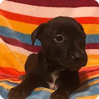 Adopt A Pet :: Mae Jemison - Garden City, MI