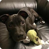 Adopt A Pet :: Nancy - Houston, TX