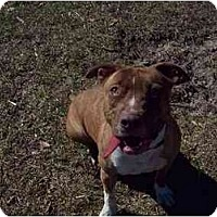 Adopt A Pet :: Maggie - Lutz, FL