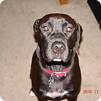 Adopt A Pet :: Molly - Georgetown, KY