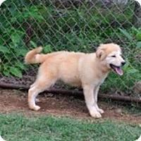 Adopt A Pet :: Marsha - Douglasville, GA