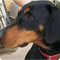 Adopt A Pet :: Jenni--adopted!! - New Richmond, OH
