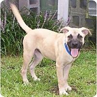 Adopt A Pet :: Sandi - Little River, SC
