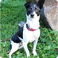 Adopt A Pet :: Tina - Mocksville, NC