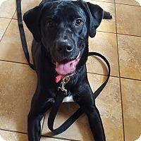 Adopt A Pet :: Fenway - Sinking Spring, PA