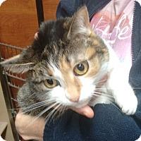 Adopt A Pet :: Honey - Morganton, NC