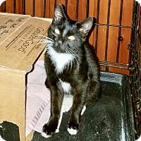 Adopt A Pet :: Phoebus - Colmar, PA