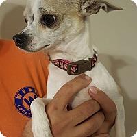 Adopt A Pet :: Emma - Mount Pleasant, SC
