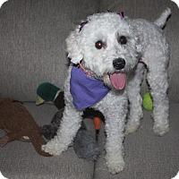 Adopt A Pet :: Carolina - Henderson, NV