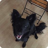 Adopt A Pet :: Saatchi - Houston, TX