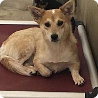 Adopt A Pet :: BOOF - Gustine, CA