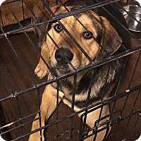 Adopt A Pet :: Kao - Denver City, TX