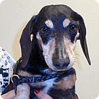 Adopt A Pet :: Peanut - Wildomar, CA