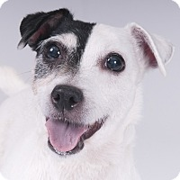 Adopt A Pet :: Susie - Chicago, IL