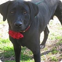 Adopt A Pet :: Villa - Voorhees, NJ