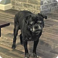 Adopt A Pet :: Burkee - Grapevine, TX