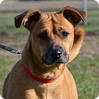 Adopt A Pet :: LoraLai - DuQuoin, IL