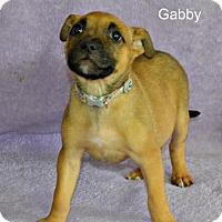 Adopt A Pet :: Gabby - Yreka, CA