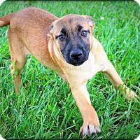 Adopt A Pet :: Pixie - Glastonbury, CT