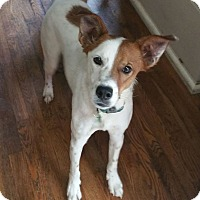 Adopt A Pet :: Riggs - Springfield, MO