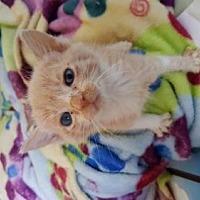 Adopt A Pet :: Haruki - Los Angeles, CA