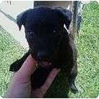Adopt A Pet :: BROGAN - San Diego, CA