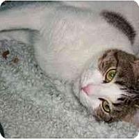 Adopt A Pet :: Mommy Cat - Secaucus, NJ