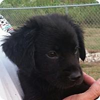 Adopt A Pet :: Charming - Huntingburg, IN