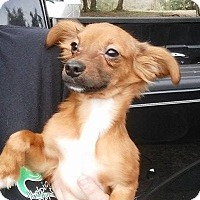 Adopt A Pet :: Callaway - Gainesville, FL