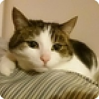 Adopt A Pet :: Chrissie - Vancouver, BC