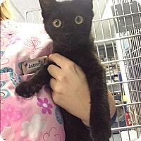 Adopt A Pet :: Dory - Richboro, PA