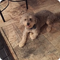 Adopt A Pet :: Tashee - Rockaway, NJ