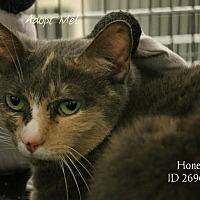 Adopt A Pet :: Honey - Camden, DE
