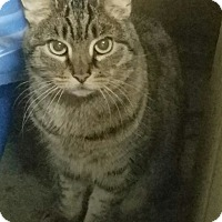 Adopt A Pet :: Casey & Nemo - Courtesy Listin - Sparta, NJ