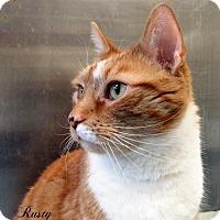 Adopt A Pet :: Rusty - Jackson, NJ