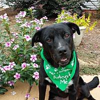 Adopt A Pet :: Mia - Alpharetta, GA