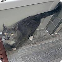 Adopt A Pet :: Tomas - Mississauga, Ontario, ON