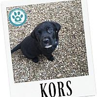 Adopt A Pet :: Kors - Kimberton, PA