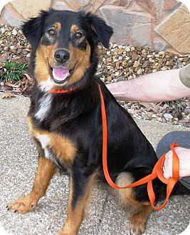 Retriever (Unknown Type) Mix Dog for adoption in Spring Valley, New York - Stella