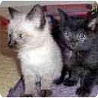Adopt A Pet :: Della & Dinah - Arlington, VA
